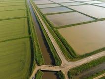 Ryżowi pola zalewają z wodą Zalewający ryżowi irlandczycy Agronomic metody rosnąć ryż w polach zdjęcie royalty free