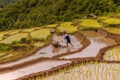 Ryżowi rolnicy na ryżu polu na tarasowatym w północnym Tajlandia, Mae ja Zdjęcia Stock
