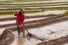 Ryżowi rolnicy na ryżu polu na tarasowatym w północnym Tajlandia, Mae ja Zdjęcia Royalty Free