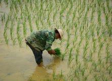 Ryżowi rolnicy pracuje na ryżu tarasu polach zdjęcia royalty free