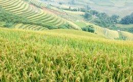Ryżowi tarasy i chałupa w górach zdjęcia royalty free