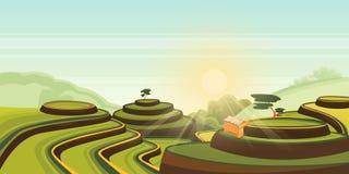 Ryżowy żniwo przyrost na tarasowych polach Wektorowa kreskówki ilustracja zieleń krajobraz Azjatycki wiejski widoku tło ilustracja wektor