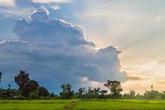 Ryżowy pole uprawne przy mrocznym zmierzchem z chmurą Fotografia Stock