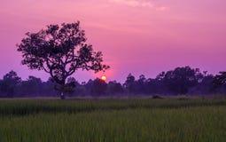Ryżowy sylwetki słońca set Obraz Royalty Free