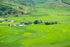 Ryżowy tarasu pole w Rainning sezonie przy Tule Obrazy Royalty Free