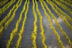 Ryżowy tarrace zdjęcie stock