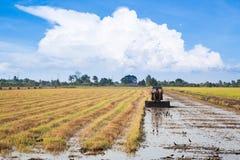 Ryżowy Uprawiać ziemię Zdjęcie Royalty Free