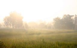 Ryżowy Uprawiać ziemię Obraz Stock