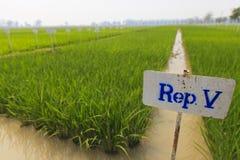 Ryżu eksperymentalny gospodarstwo rolne obraz stock