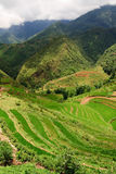 ryżu krajobrazowy taras Zdjęcia Royalty Free