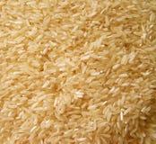 ryż. Obraz Stock