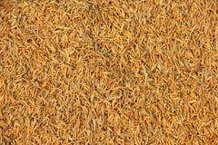 Ryżowa plewa. Zdjęcia Stock