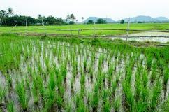 Ryżowi jagodowi organics r Zdjęcie Royalty Free