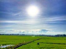 Ryżowi pola Zdjęcie Stock