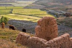 Ryżowi pola, Madagascar Obraz Stock