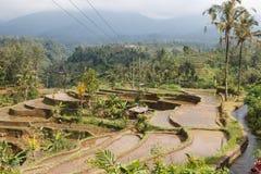 Ryżowi pola w dolinie przy Bali Zdjęcie Stock