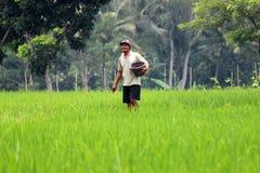 Ryżowi rolnicy Obrazy Stock