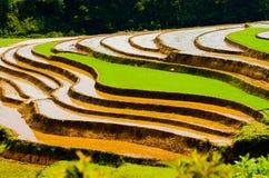 Ryżowi tarasy Obraz Royalty Free