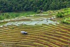 Ryżowi tarasy Obraz Stock