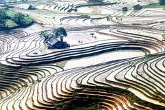 Ryżowi tarasy H'Mong etniczni ludzie w Y Ty, Laocai, Wietnam przy wodnym plombowanie sezonem (Maj 2015) Zdjęcia Stock
