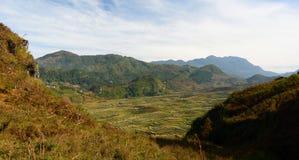Ryżowi tarasy Sa Pa Wietnam Zdjęcie Royalty Free
