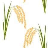 Ryżowy bezszwowy wzór Obraz Royalty Free