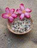 Ryżowy kosz Zdjęcie Stock