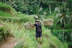 Ryżowy rolnik Zdjęcia Stock