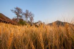 Ryżowy widok w Chaing Mai Zdjęcia Stock