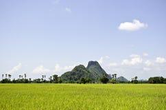 ryż pola Thailand zdjęcie stock