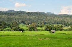 ryż pola Thailand Obraz Stock