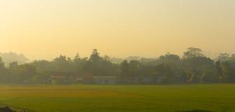 Ryżu pola w tropikalnym kraju na ranku Obrazy Royalty Free