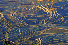 ryżu porcelanowy taras Yang Juan Zdjęcie Stock
