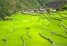 ryżu taras Obrazy Stock
