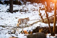 Ry? w zimie zdjęcie royalty free