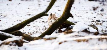 Ry? w zimie fotografia royalty free