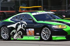 Ryan Dalziel rent Jaguar XKR royalty-vrije stock foto