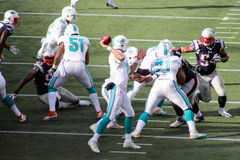 Ryan Tannehill, stratega di Miami Dolphins Immagine Stock