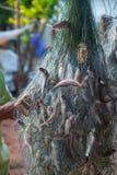 Ryba łapiąca w sieciach Zdjęcia Stock