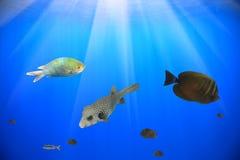 ryba Zdjęcia Royalty Free