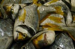 Ryba… Obrazy Royalty Free