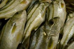 Ryba… Zdjęcia Stock
