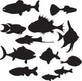 ryba Zdjęcia Stock