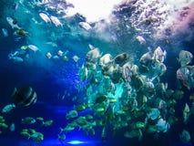 Ryba Obraz Stock