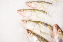 Ryba dla sprzedaży na lodzie Obraz Royalty Free
