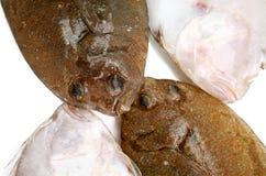 ryba flądra Obrazy Stock