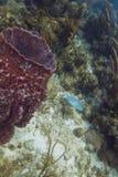 Ryba i gąbka Obrazy Stock