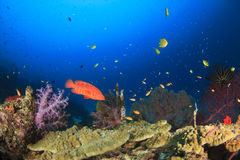 Ryba i koral Obrazy Stock
