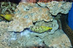 Ryba i morze obraz royalty free