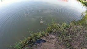 Ryba je popas rybak zbiory wideo
